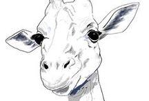 sketching: animals