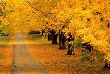 Autumn / Fall / How I love autumn....the beauty of nature with the gift of leaves changing their colors.... / by Roxanne