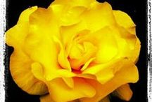 Yellow / Designs of all kinds, with the one thing in common that they have elements of yellow