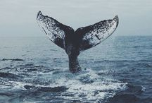 Whales Are So Majestic / I love whales ❤️