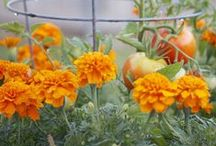 Gardening / by Pat Barrows