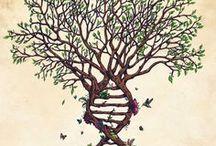 Arbres généalogiques / Arbres généalogiques / Family Trees / Stammbaüme / Árboles. / by Tatiana Yvon Généalogiste Professionnelle