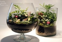 Indoor Gardening, Terrariums and Orchids