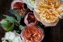 Flowers & In The Garden
