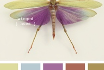 Design Elements / by Canary Created