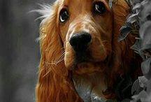 cute animals / by Debi - Better Living Hanson