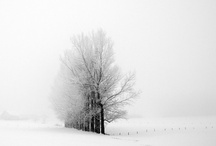 Winter / by Ines Eiban