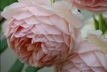 Flowers & Garden / by Alex Ritchie