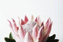 Plant Life / by Kelsey Cronkhite
