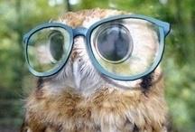 Owls / by Amanda James