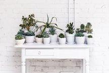 Grow / Plants and Gardening / by Haley Sierra Sorbel