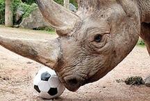 Rhinoseros / by Anne Hufflepuff