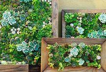 Garden / by Brooke Roberts