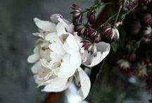 Bloom / by Haley Sierra Sorbel