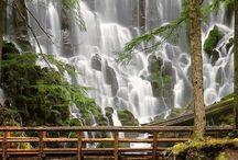 Oregon / by Stephanie Ferguson-Brown