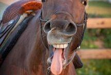 Horses and Barns / by Amanda James