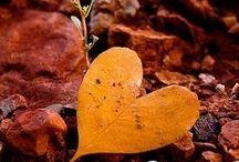 'Embracing Autumn'