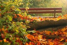 I Love Fall / by Michelle @ everydaymomentsofourlife