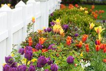 GARDEN: VegFloraLawn / Lovely gardens and landscaping  #gardens; #landscaping