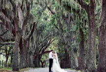 Picture Perfect! / by Posh Petals & Pearls