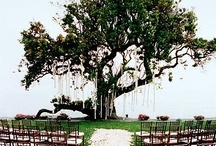 Ceremony Details / by Posh Petals & Pearls
