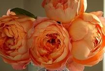 Orange Color Scheme / by Posh Petals & Pearls