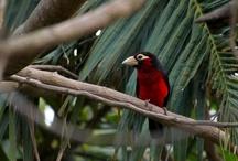 Field Guide to the Birds of Ghana / by Key Ghana