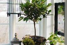 GARDEN:DeckPatioIndoor  / #deck_garden #deck_vegetable_garden #patio_garden #indoor_garden