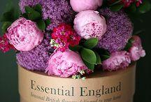 British Florals... / by L u c y G a n d o.