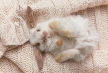 Fluffy Lapin... / by L u c y G a n d o.