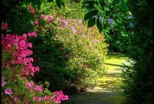 Enchanting Paths & Dusty Roads / #paths #enchanting #roads #country_roads  # dusty_roads  #sun_rays