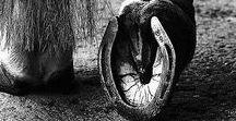 Carrow / Yorkshire | diabolus enim celes ungula equii