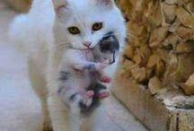 Koťata / nastenka se thlavne kotat a kocek