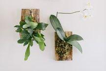 Life Is Good, My Friend. / Plants, birds, nature, inspiration.