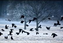 Birds / by Laurie dill-Kocher