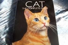 Cat Training Tips