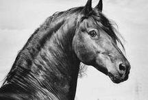 Horses ref.