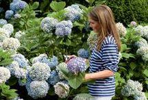 Beautiful Gardens / Beautiful gardens and outdoor areas