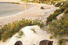 Australie Voyage / Collection d'idées et d'inspiration pour un voyage en Australie.