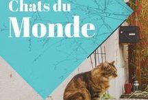 Chats en voyage / En voyage, on aperçoit toujours des chats, pour notre plus grand plaisir! Cette planche vous emmènera à la découverte d'un monde tout félin!