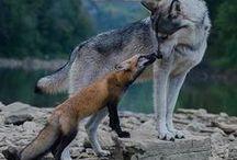 Animals of Spirit
