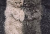 Cats <3 / CUTE , CUTE , CUTE , ... <3 <3  I Love Cats <3 <3