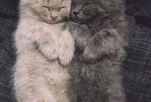 Cats <3 / CUTE , CUTE , CUTE , ... <3 <3  I Love Cats <3 <3