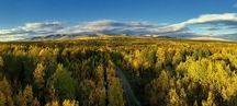 Murmansk region. Forest and water / Murmansk region. Forest and water