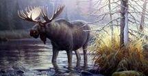 Animal. Moose and elk / Moose and elk