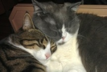 My Cats :)) / My loves, my kids, my soulmates: Spikey & Caspar / by TheZipCode