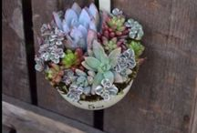 Cool Ideas / by Samantha Hollingshead
