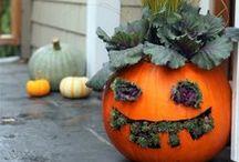 It's Fall Yall!