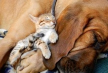 Felines & Canines / Paws for thought Cute dogs and cats.... Add and share your favourite pics! / by Pride and Joy Pets