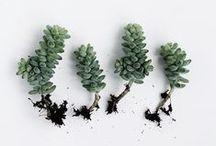 // succulents / Little green succulent babies. A blogger's best friend!
